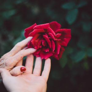 Photo of young and older hands with rose.