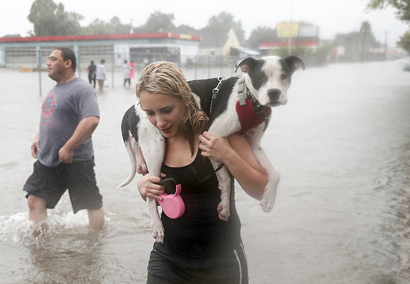 Naomi Coto carries Simba on her shoulders as they evacuate their home after the area was inundated with flooding from Hurricane Harvey on August 27, 2017 in Houston, Texas.(Photo by Joe Raedle/Getty Images)